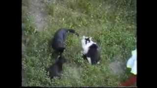 В память коту Бемолю(прелюдия фа минор)