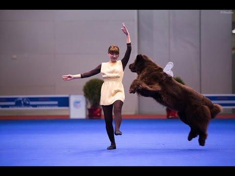 Танцы с собаками 'Евразия 2014'. Dog Dancing. Canine Freestyle.