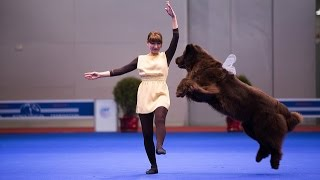 """Танцы с собаками """"Евразия 2014"""". Dog Dancing. Canine Freestyle."""