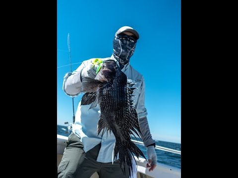 Jigging Black Sea Bass w/Gulp