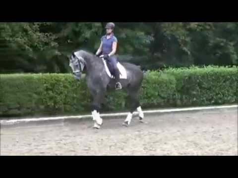 SOLD www.sporthorses-online.com 2011 Hanoverian mare dressage prospect for sale from YouTube · Duration:  3 minutes 38 seconds