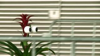 Brutale Bromelia: plant blijkt vrouwenversierder