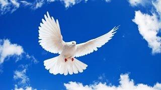 Best Music Internet. Birds fly away. Лучшая музыка интернета. Улетающие птицы.