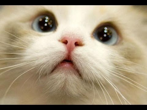 BEST 2 HOUR LONG FUNNY CAT COMPILATION - Funny Kitty Cat Fails & Kitten Moments by FunnyVines