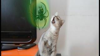 parodia spiderman tengo los poderes del hombre araña