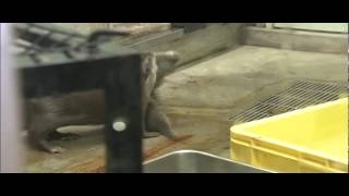 ことし8月に福岡市動物園に誕生したコツメカワウソの4つ子の赤ちゃん! ...