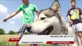 Породистый – не значит счастливый: почему в Днепре собаки оказываются на улице?