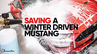 15 Hour Mustang Deep Clean! Satisfying Auto Detailing