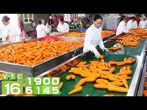 Giải pháp để ngành chế biến nông sản bứt phá   VTC16