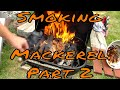 Cold Smoking Some Mackerel Part 2