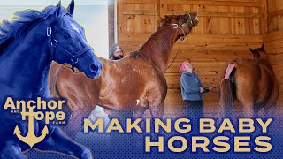 Getting Mares Pregnant on a Stallion Farm in Maryland