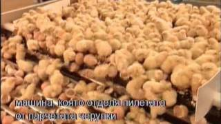 How it's made - Mass production chicken fabric chicken factory BG subtitles