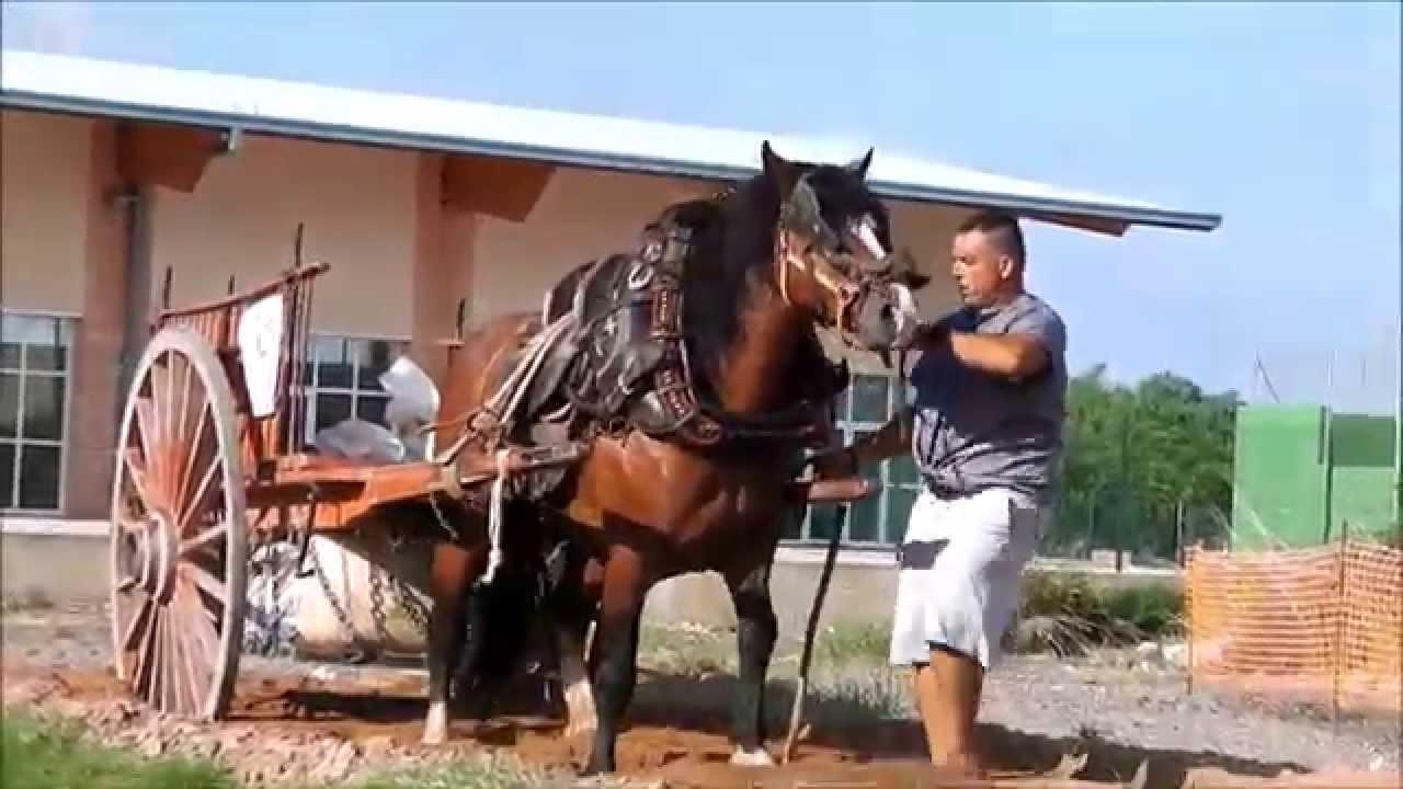 Mi pel cula caballos de tiro y arrastre en silla fiestas for Sillas para caballos