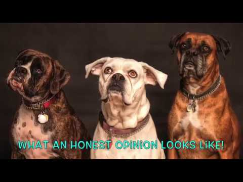 """TRY NOT TO LAUGH - 50 Funny & Cute Dog Memes (Adult Humor) """"WATCH TIL THE END"""""""
