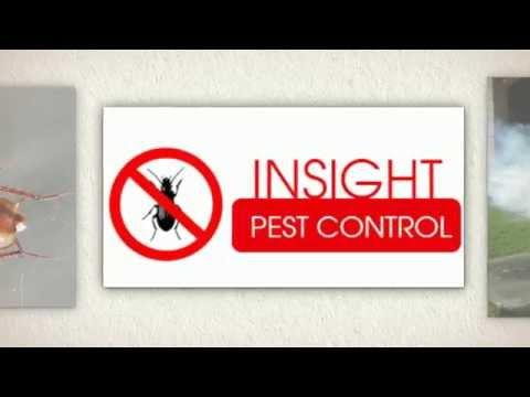 Pest Control Eastern Suburbs Sydney   Insight Pest Control Bronte