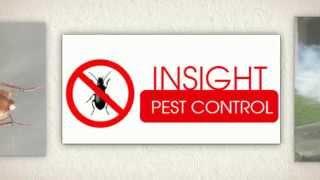 Pest Control Eastern Suburbs Sydney | Insight Pest Control Bronte