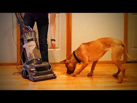 Dogs Vs Vacuum  😂🐶 Funny Dog's Reactions to Vacuum (Full) [Funny Pets]