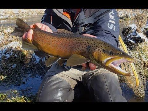 Big Brown Trout: South Holston River