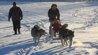My Homemade Dogsled
