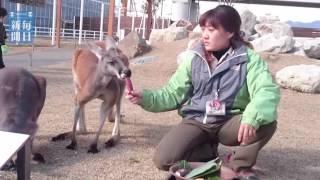 神戸市中央区の動植物園「神戸どうぶつ王国」は3日、カピバラやリクガメ...
