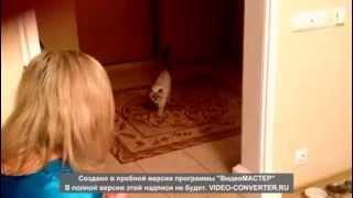 Самая послушная кошка 2013 !