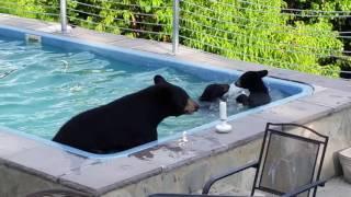 水の恋しい季節になりましたね!ということで、子供連れでプールを借りに来たクマー