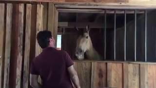 Видео - зарисовки из жизни лошади