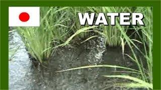 Water Sounds in Japanese Rice Fields - Walking in Japan 日本の水田における水の音 - 日本のモンスター