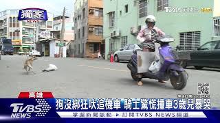 #獨家 小心惡犬!男騎車載3歲兒遭狗追 失控衝對向撞轎車|TVBS新聞