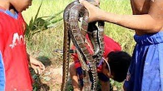 wow! เด็กกล้าหาญจับงูน้ำใช้ไม้ไผ่ - วิธีการจับงูน้ำในประเทศกัมพูชา #4