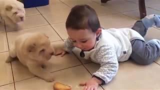 사랑스런 아기+귀여운 동물=꿀잼 영상