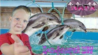 Дельфинарий. Шоу. Представление дельфинов. Видео для детей