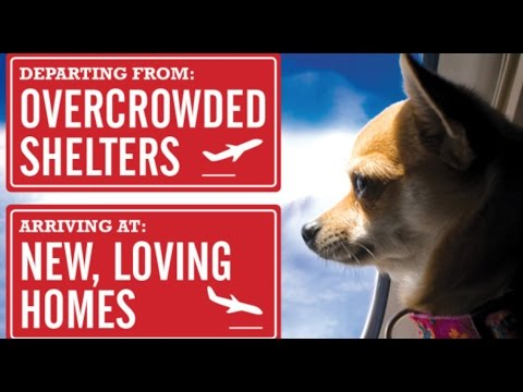 Wings of Rescue: Passionate Pilots Saving Dogs and Cats!