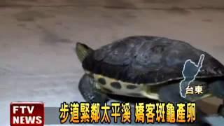 健身步道 赫見斑龜產卵-民視新聞