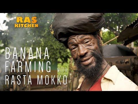 Banana Farming with Rasta Mokko