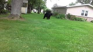 Bear in Quakertown pa
