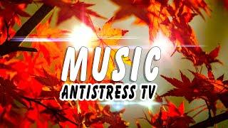 Download Золотая Осень и Потрясающая Музыка  ❤ КРАСИВО! Relax #AntistressTV Mp3 and Videos