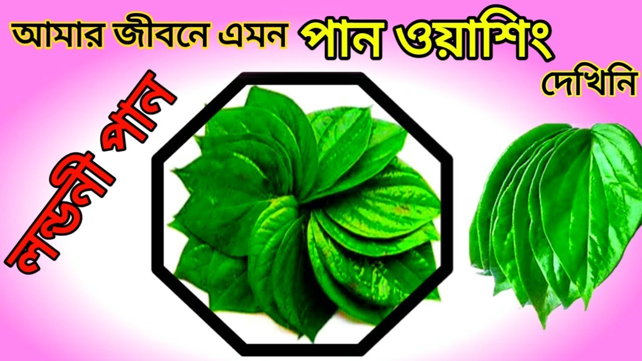 Betel leaf washing    Paan washing    Betel Nuts cleaning by liquid