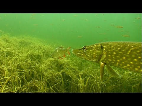 Подводная охота в Ростовской области