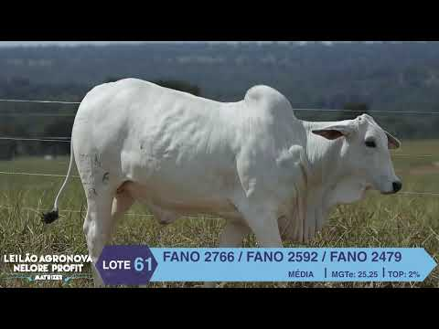 LOTE 61 FANO 2766 X 2592 X 2479