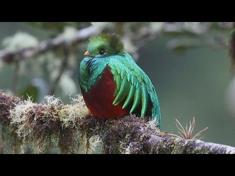 環境先進国コスタリカ 幻の鳥 ケツァールも , YouTube