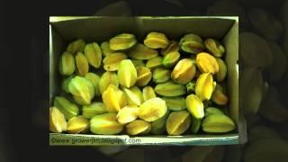 Бильбергия Сандерса (Billbergia saundersii)