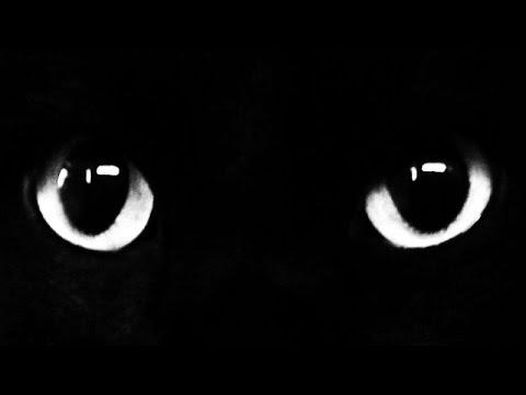 Michel pastoureau histoire des couleurs noir - La marchande de couleur ...
