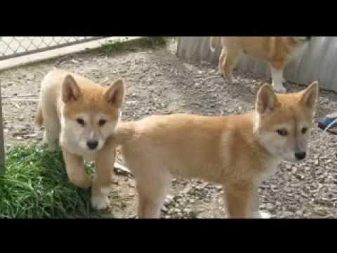 Гриффины: Дикая собака Динго по кличке Бинго