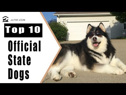10 Official State Dogs