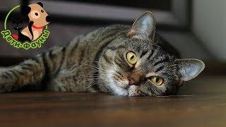 Кошки в жару, как помочь животному?