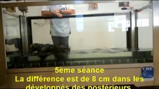 Fanzy Cairn Terrier / Hydrotherapie / Exérèse & Lca