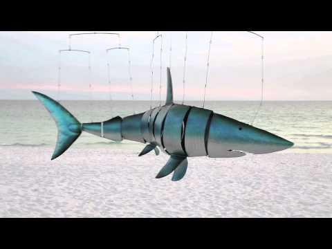 Shark | Doovi