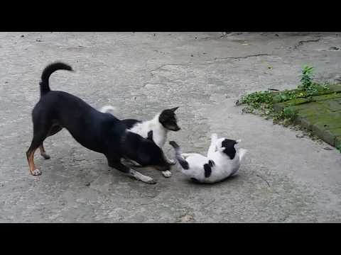 dog vs cat fight | fighting dogs & cats