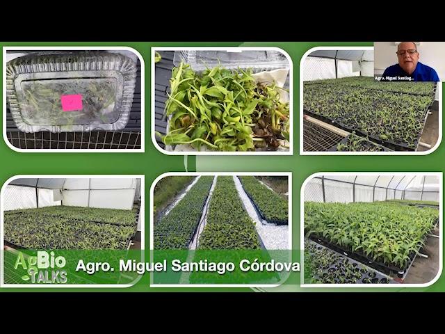 Producto agrícola del laboratorio a la tierra
